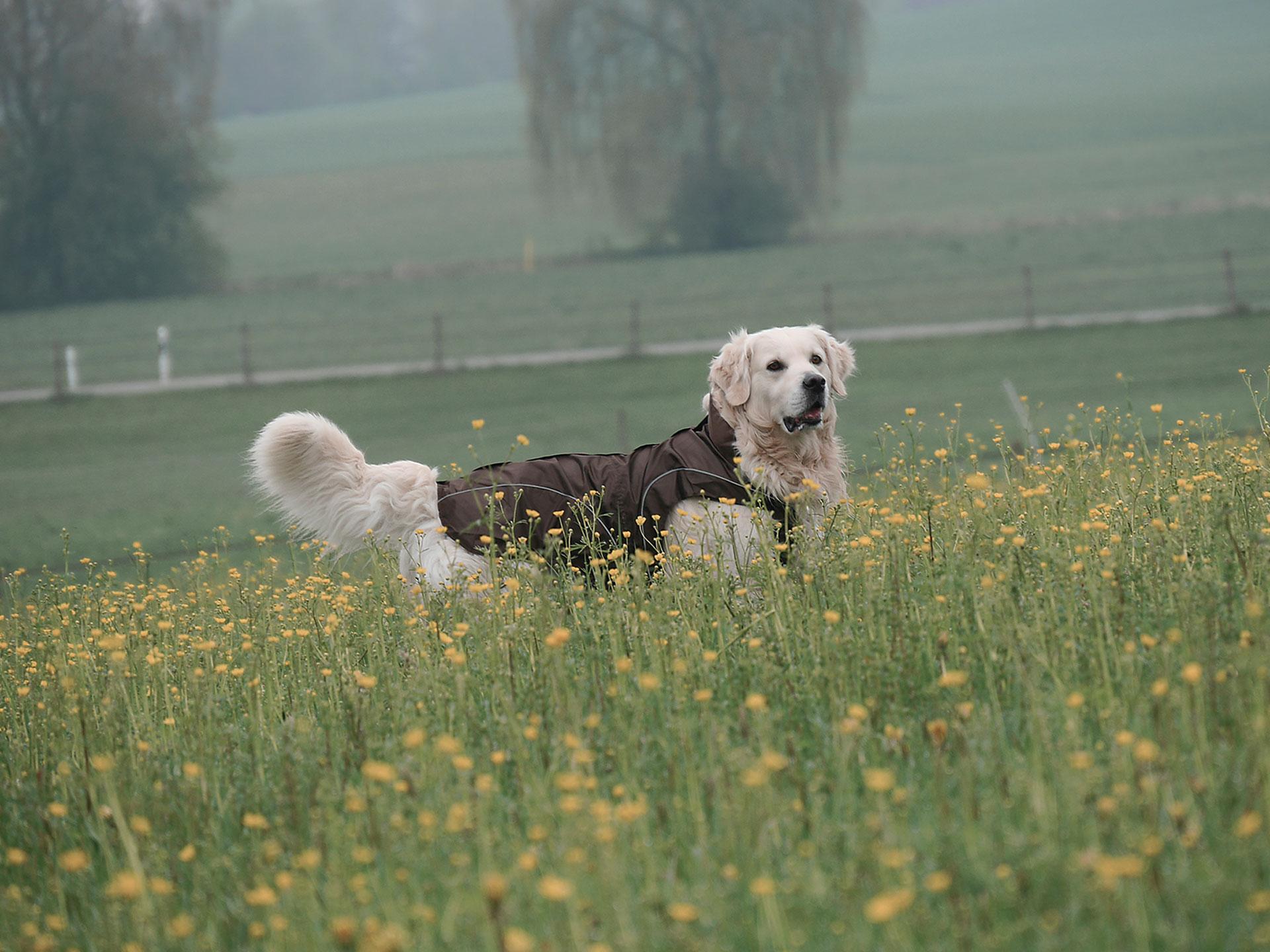 dogbite_slider_01