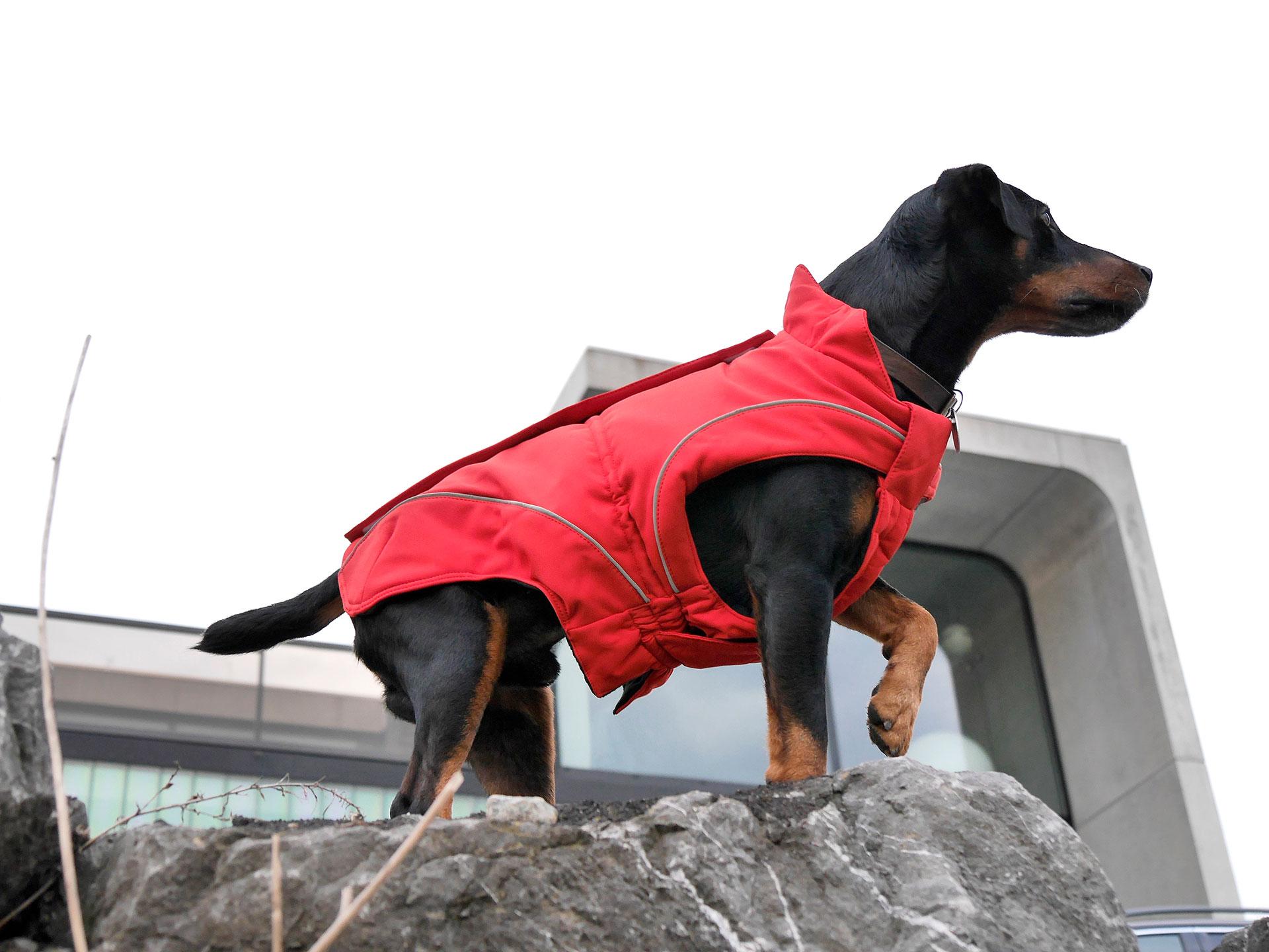 dogbite_slider_02