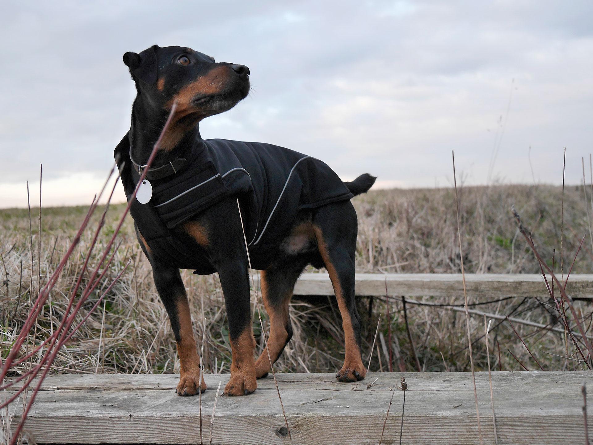 dogbite_slider_03