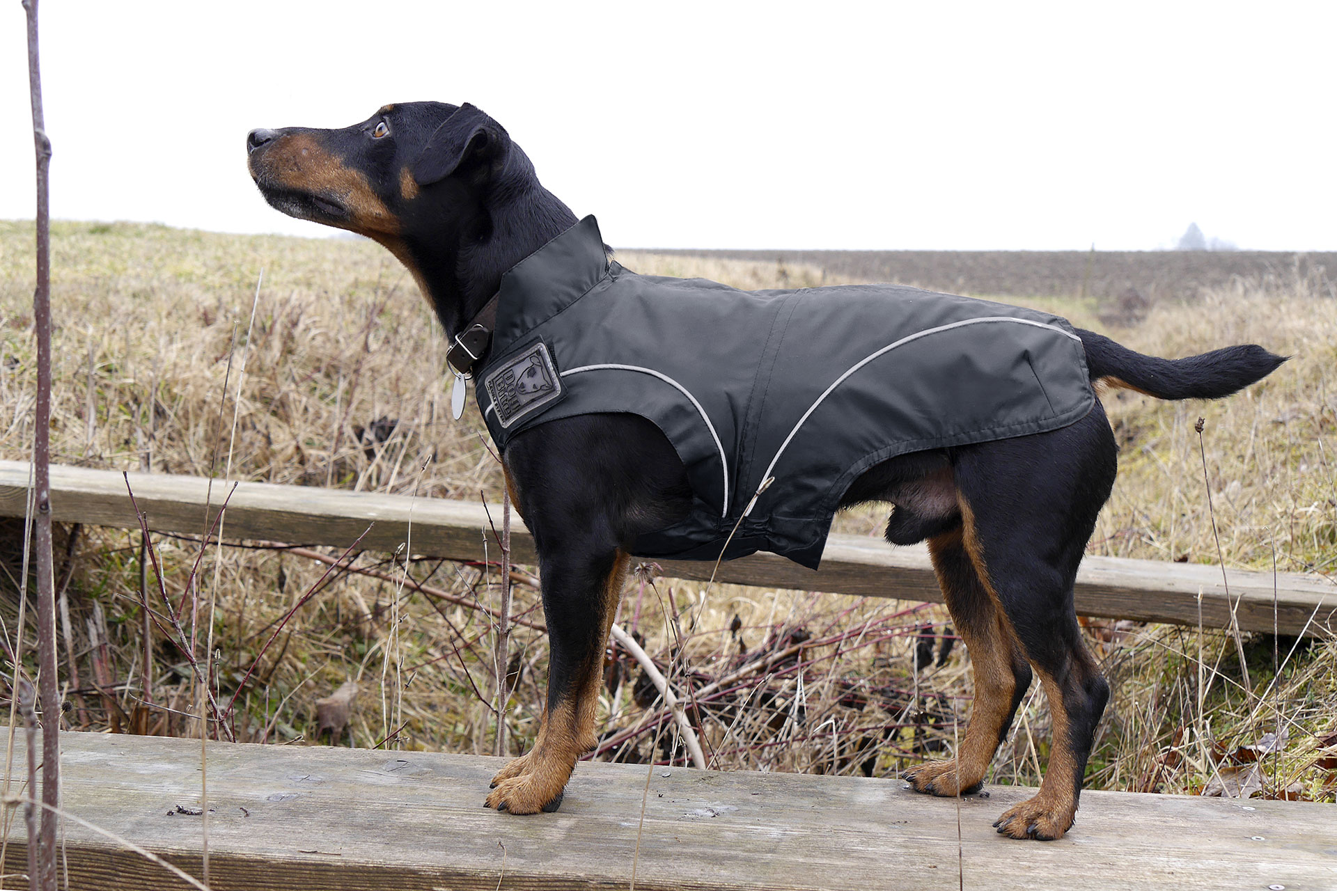 Hunde Regenjacke / Ganzjahresjacke – Schwarz